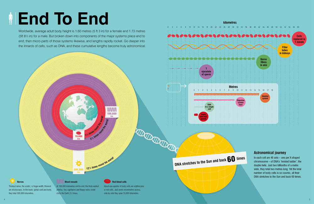 Scientific infographics focusing on cell lengths